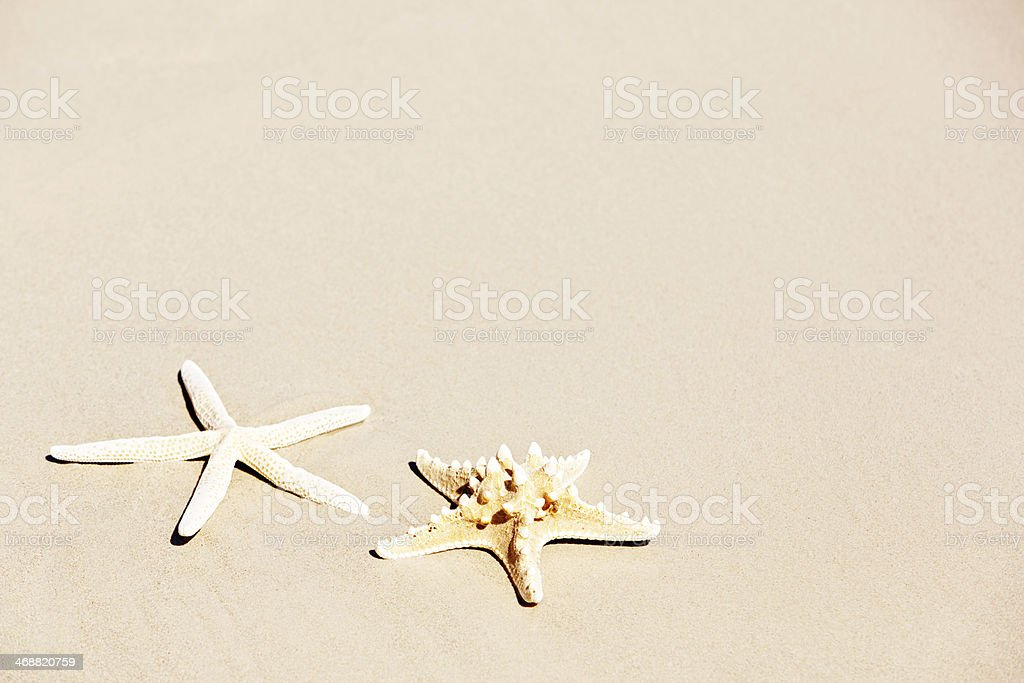 Two starfish on beach sand. Holiday background with copy space. stock photo