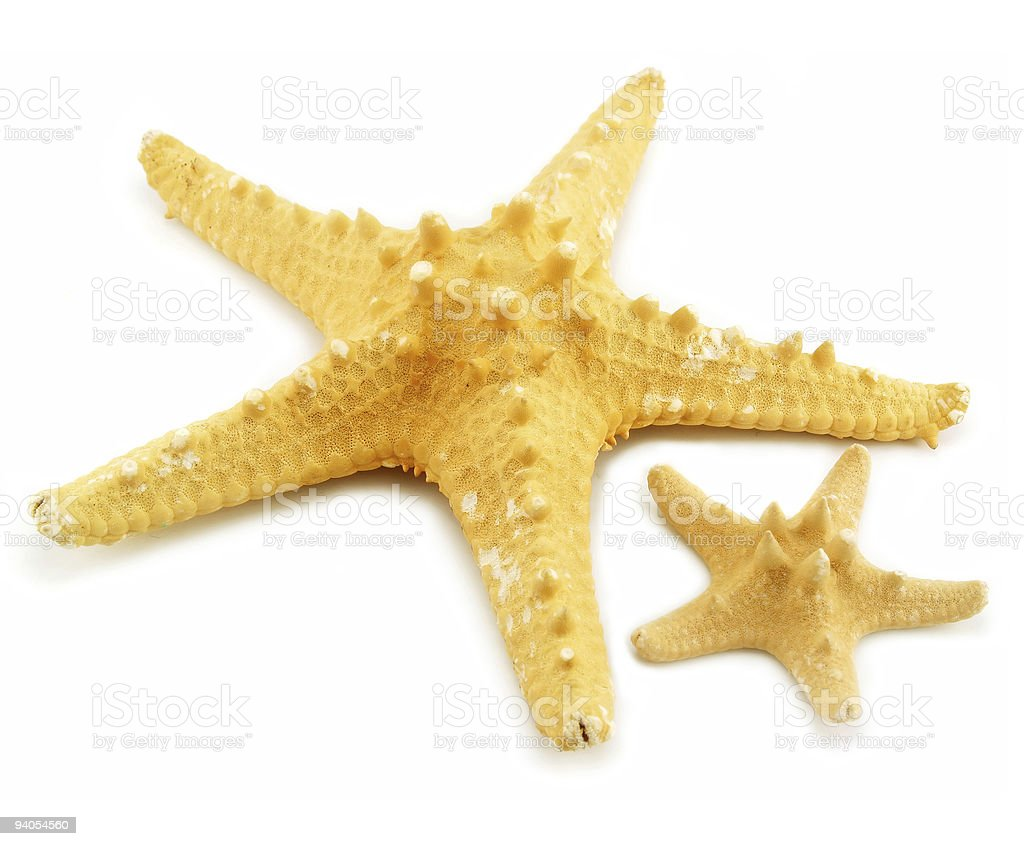 Two starfishes (small and big) isolated royalty-free stock photo
