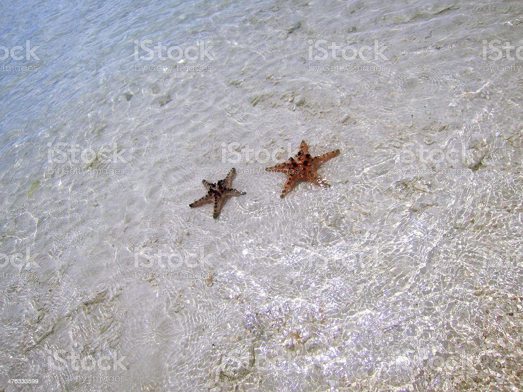 Two Starfishs in Running Water royalty-free stock photo