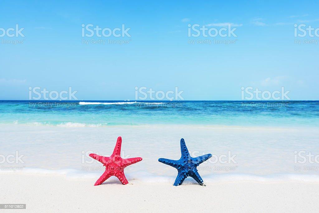 Two starfishs standing on white sandy beach stock photo