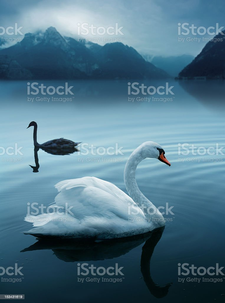 Two swans at the mysterious lake stock photo