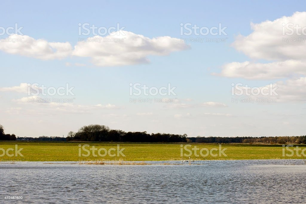 Two swans in the alluvial stock photo