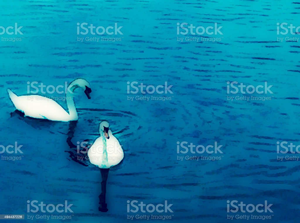 Two swans on a lake royalty-free stock photo