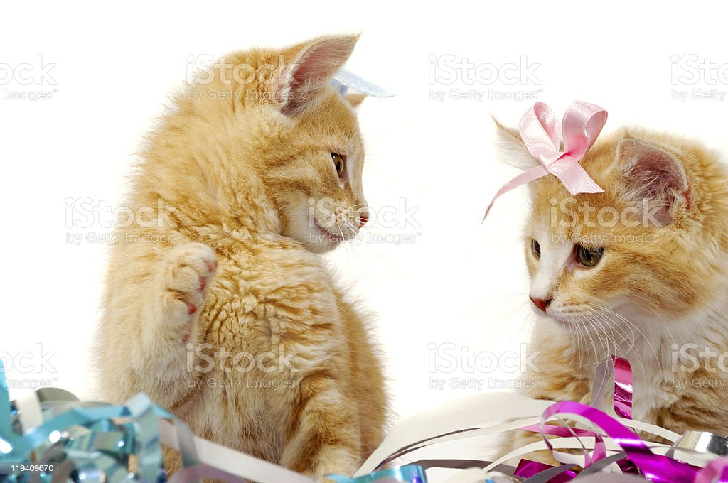 Two sweet cat kittens royalty-free stock photo
