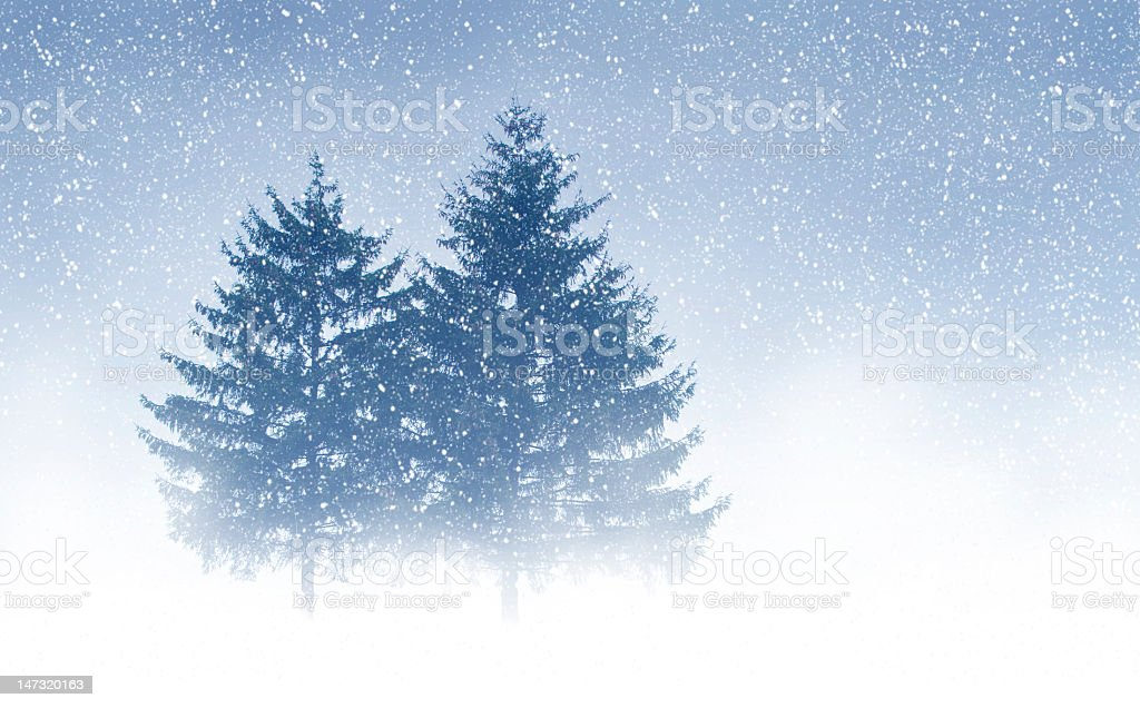 Two tall trees surrounded in light snow royalty-free stock photo
