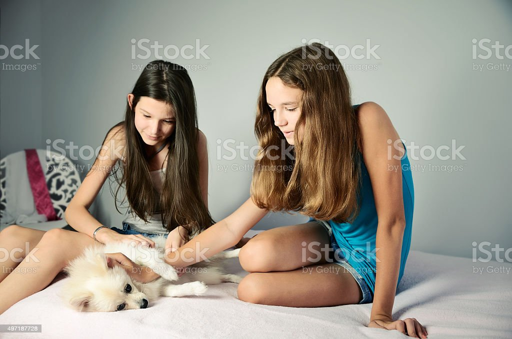 two teen girls stroking pomeranian. horizontal stock photo