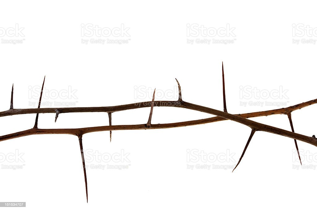 two thorny tree twigs stock photo