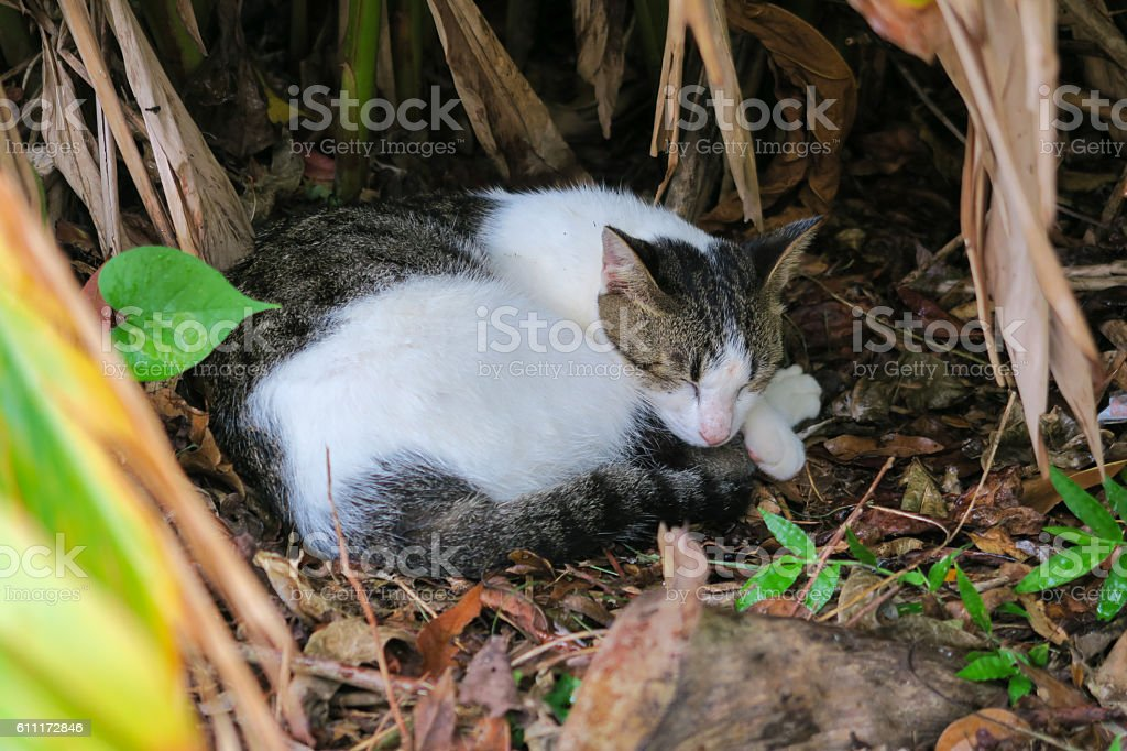 Two toned cat sleep happily in a bush stock photo