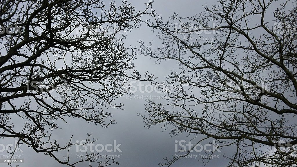 Two trees' branches and twigs meet each other. stock photo