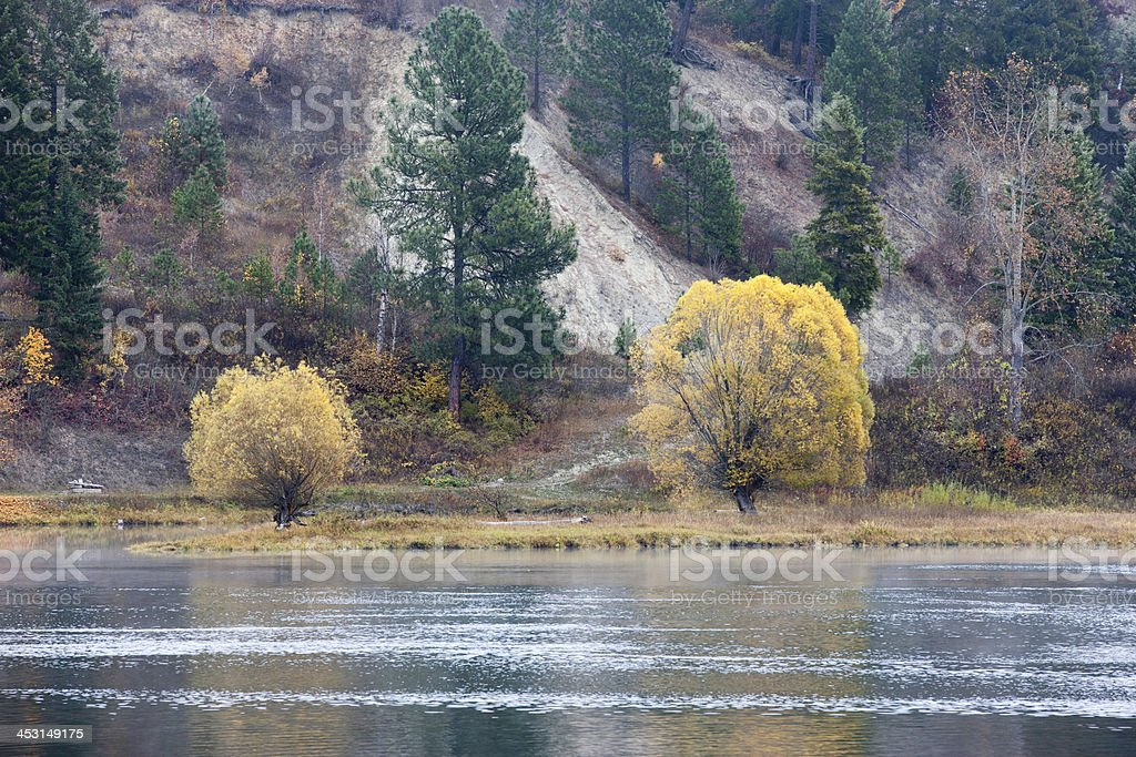 Two trees by the river. stock photo