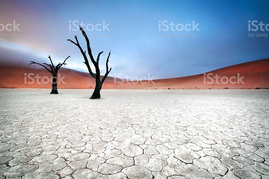 Two trees in Deadvlei stock photo