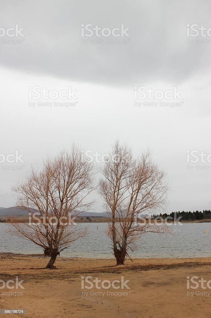 Two trees in Jindabyne in winter stock photo