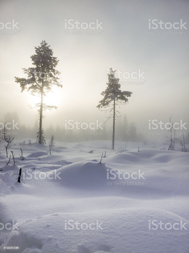 Two trees in spooky winterland stock photo