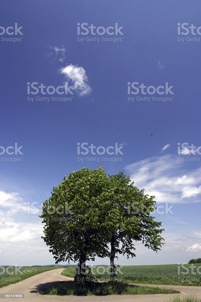 Two trees in summer royalty-free stock photo
