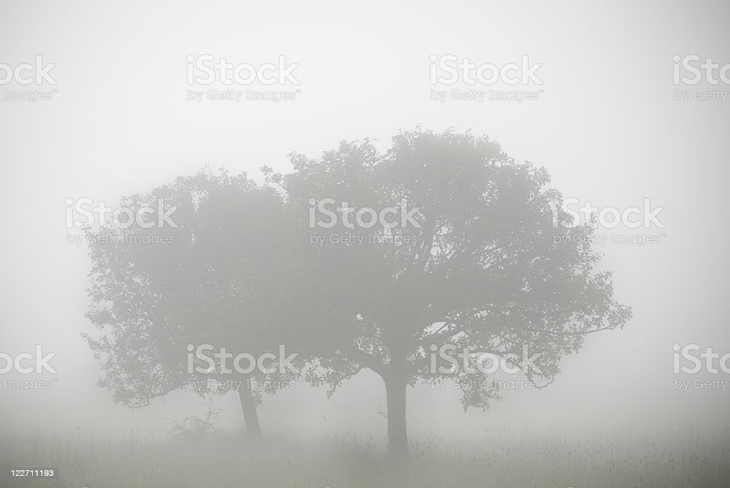 Two trees in the fog, gloomy and mysterious atmosphere stock photo