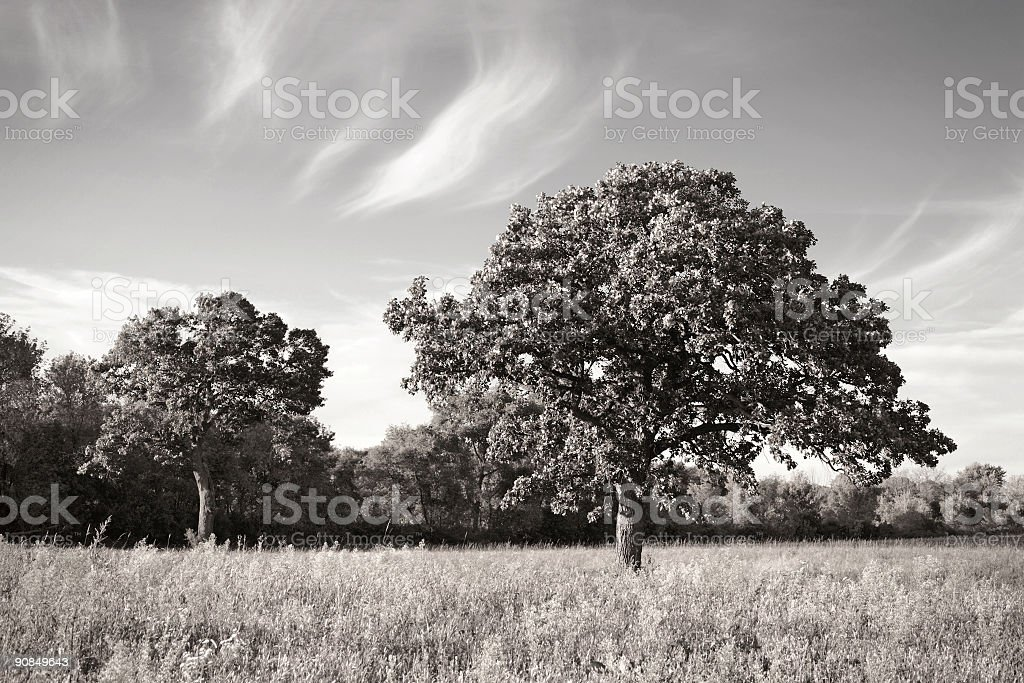 Two Trees in the prairie (toned) stock photo