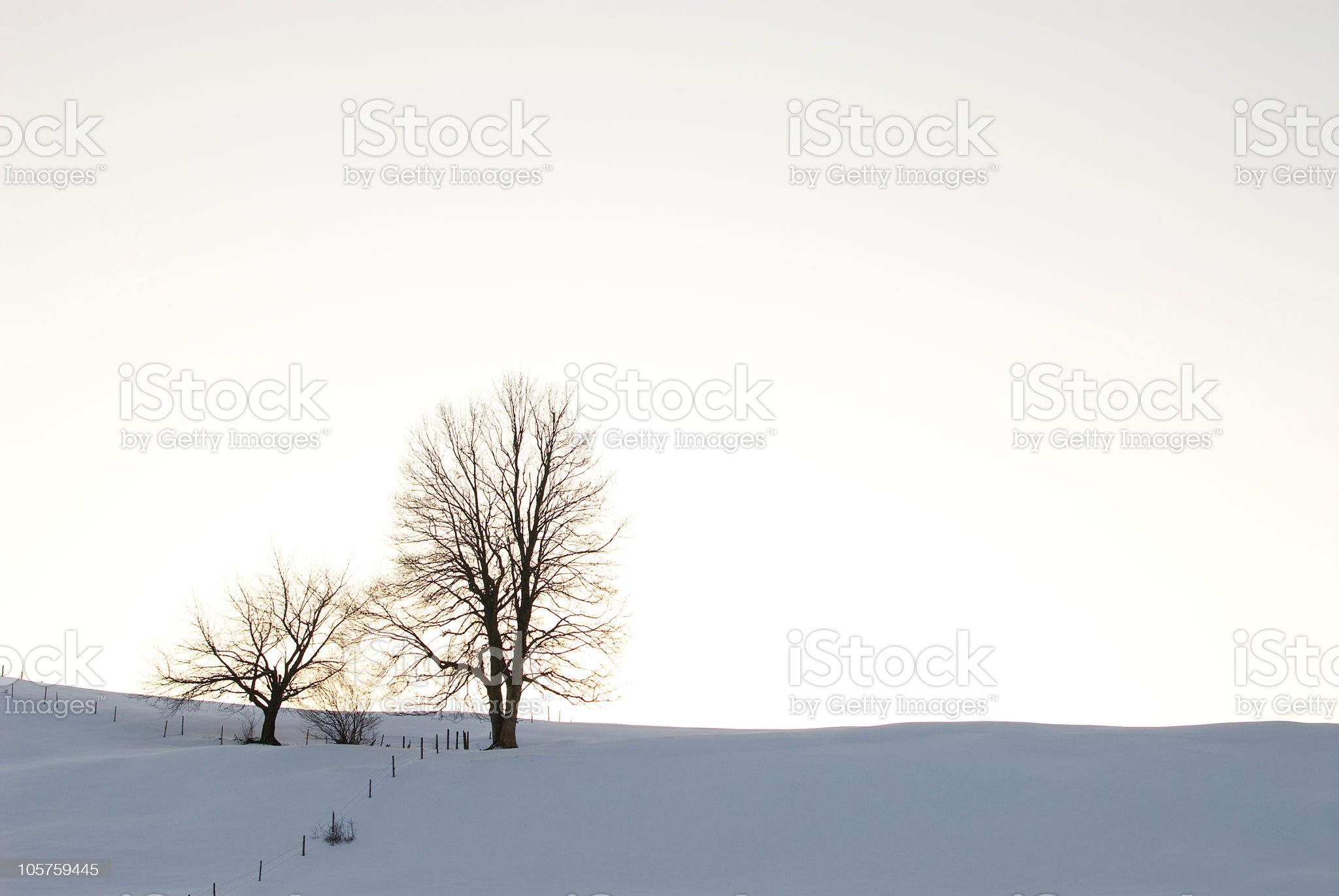 Two Trees in the winter royalty-free stock photo