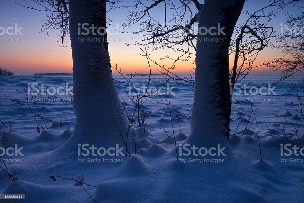 Two trees on the beach royalty-free stock photo