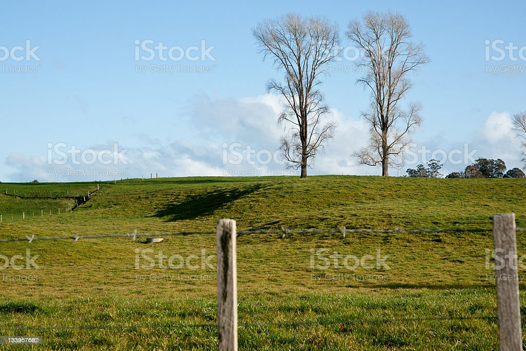 Two trees. stock photo