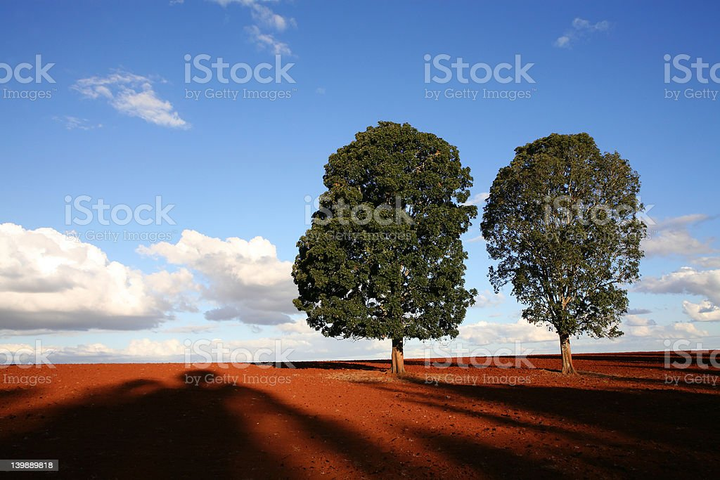 Two Trees royalty-free stock photo