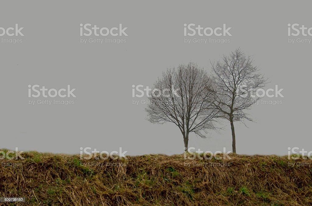 Two trees stock photo