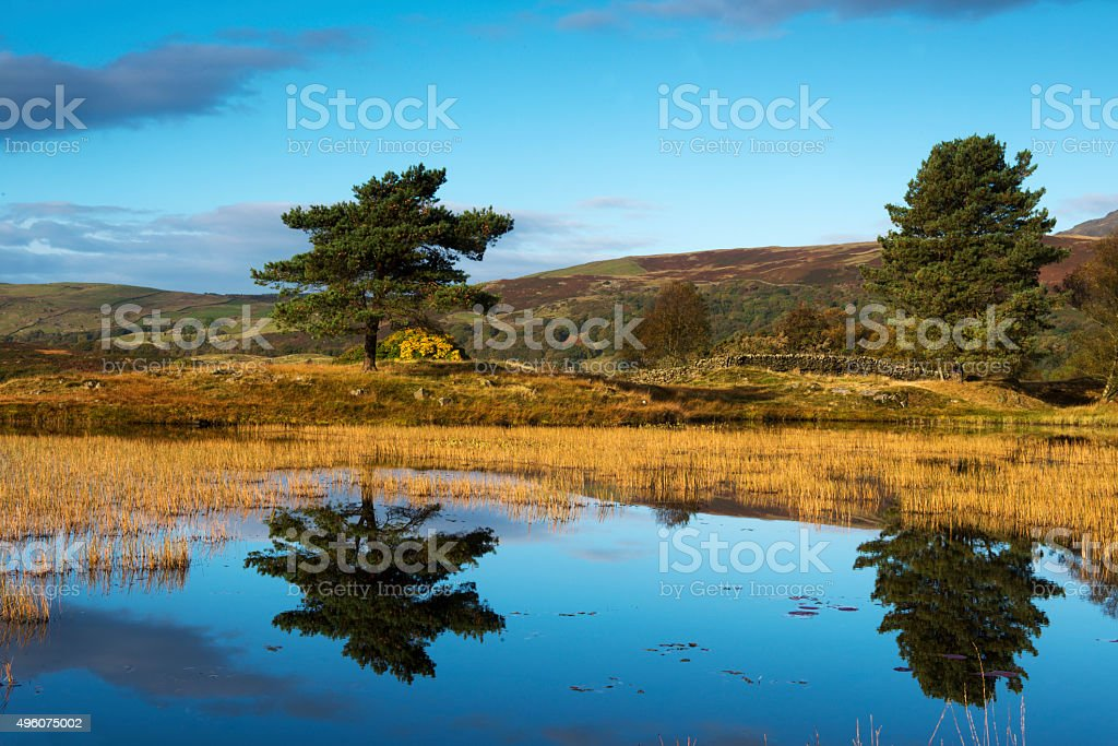 Two Trees Reflected in Lake stock photo