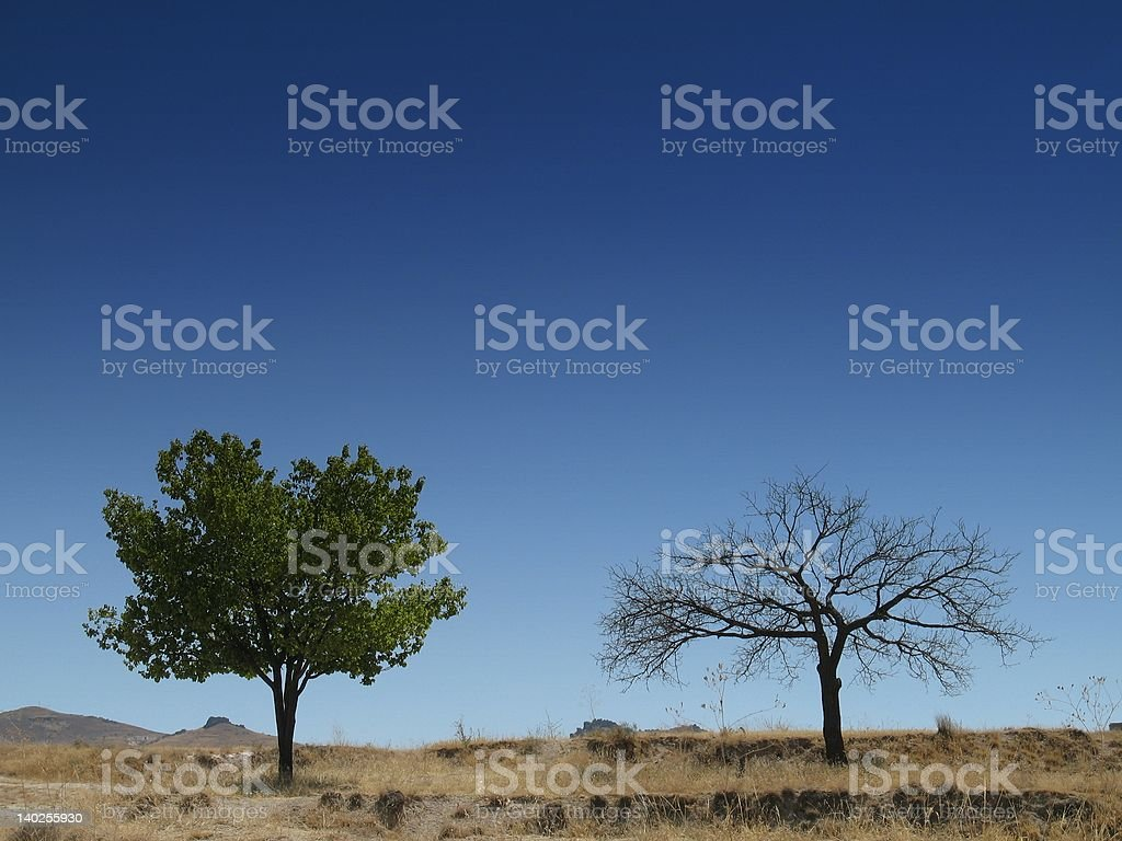Two trees (alive and dead) standing alone in desert stock photo