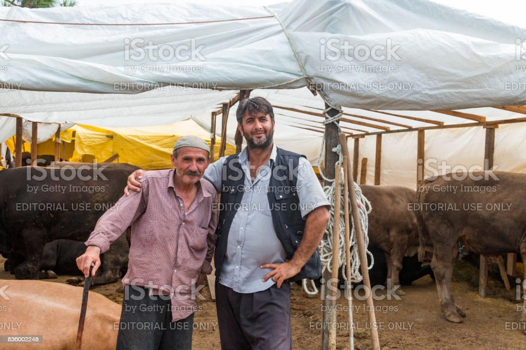 Two Turkish men make a deal on animal market on August 19, 2017 in istanbul, Turkey. Animal traders negotiate via handshake the price of one or more cows. stock photo