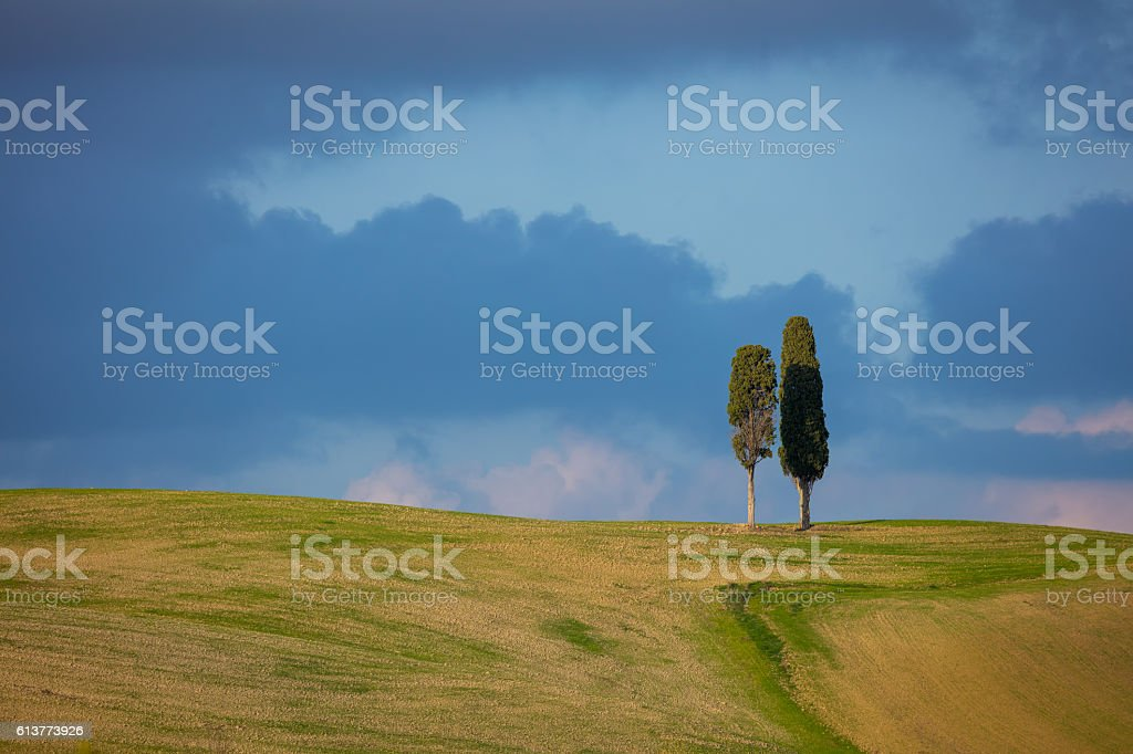 Two Tuscany cypresses trees over blue sky and clouds stock photo
