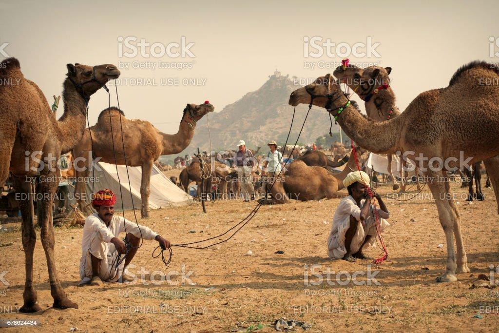 Two unidentified cameleers with their camels at Pushkar Cattle Fair stock photo