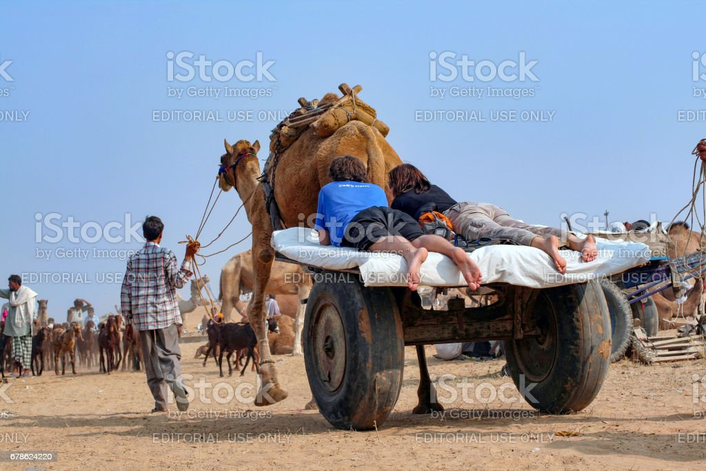 Two unidentified Caucasian tourists take ride on typical camel driven Wagon Cart at Pushkar Camel Fair stock photo
