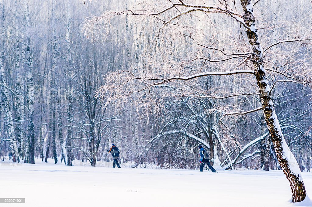 Two unrecognizable persons go on ski along the forest trail stock photo