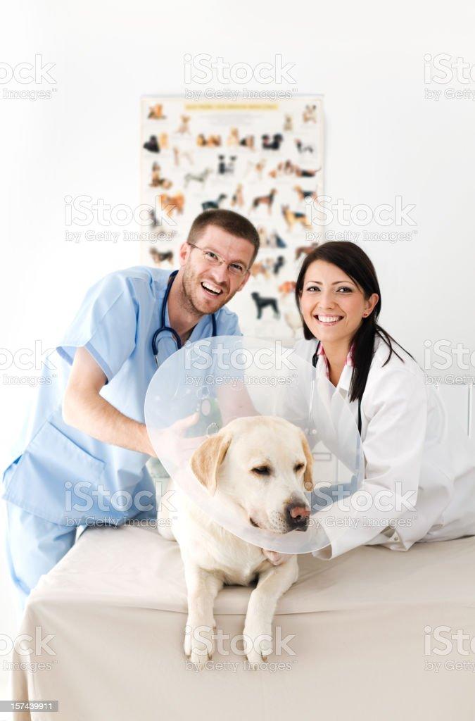 Two Veterinarians Examining A Dog royalty-free stock photo