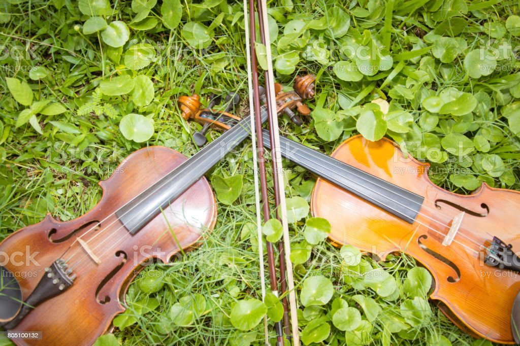 Two violins placed on a beautiful lawn. stock photo