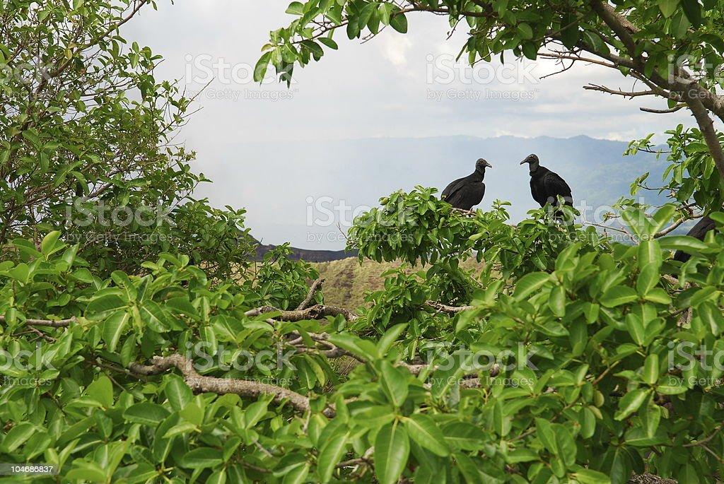 Two vultures at Masaya Volcano in Nicaragua royalty-free stock photo