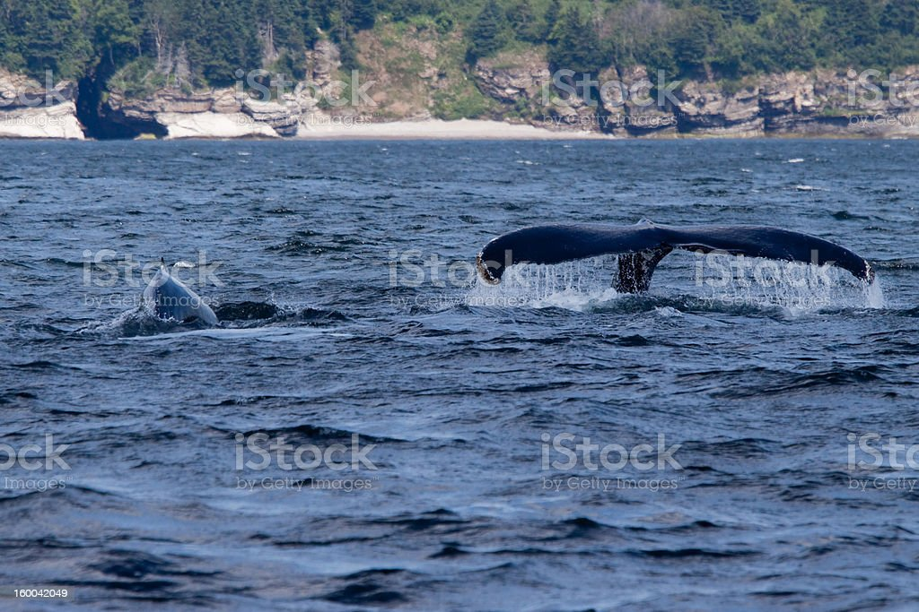 two whales stock photo