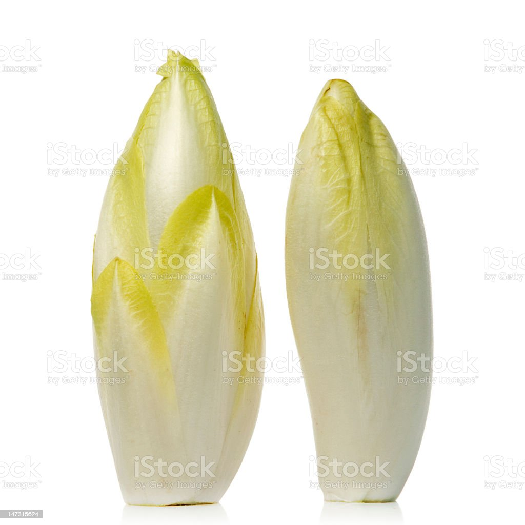 Two white and yellow endives upright on a white background royalty-free stock photo