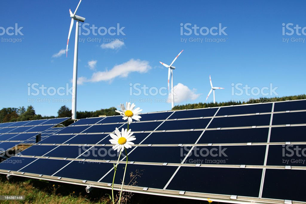 Two white daisies standing next to solar panels and turbines royalty-free stock photo