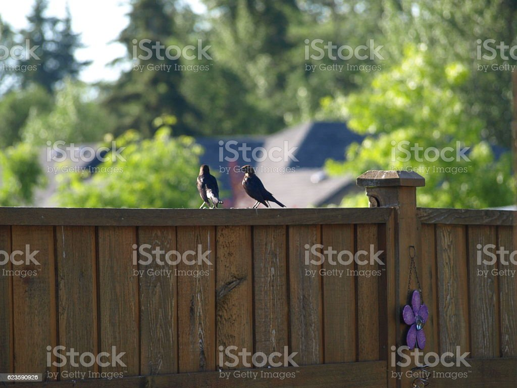 Two wild birds having conversation on wooden fence stock photo