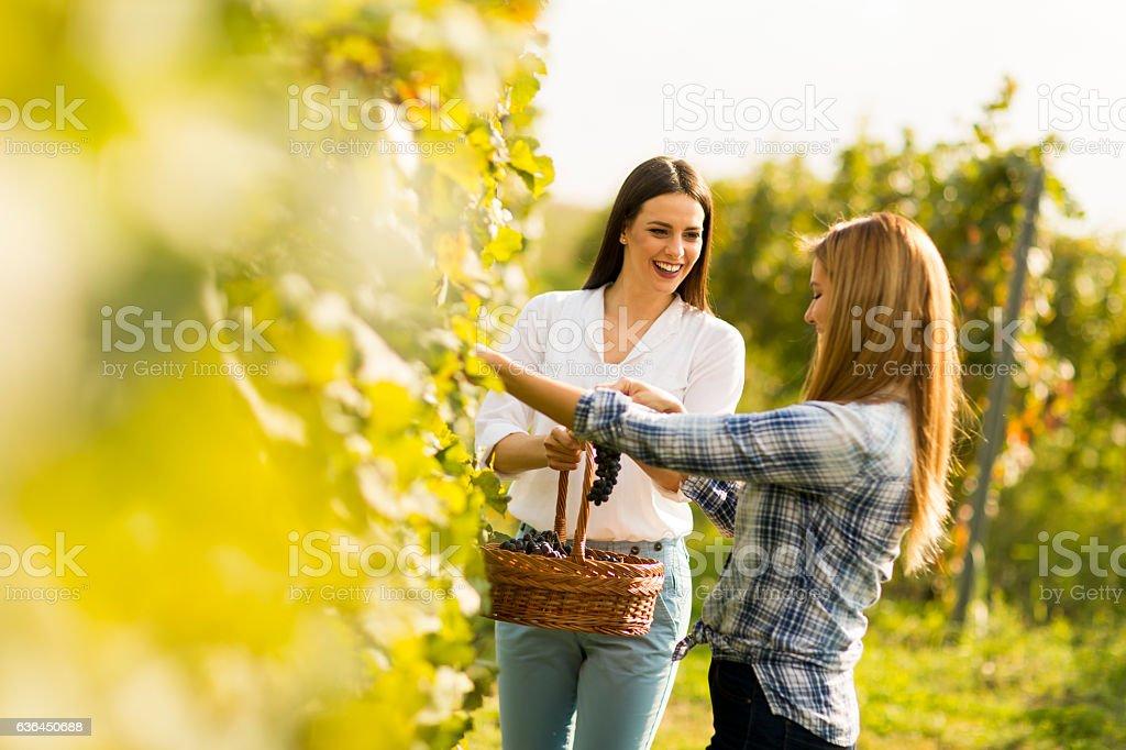 Two women in vineyard stock photo