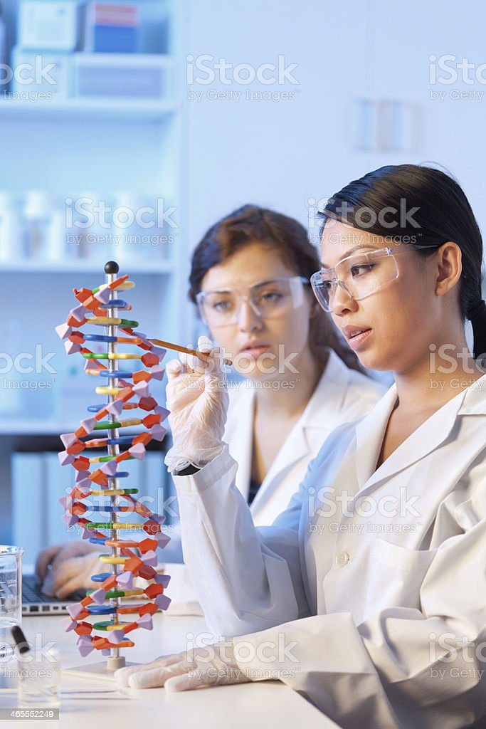 Two Women Students Studying DNA Model in School Research Laboratory royalty-free stock photo