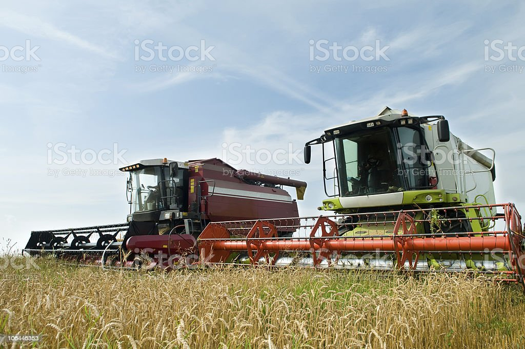 Two working harvesting combines royalty-free stock photo