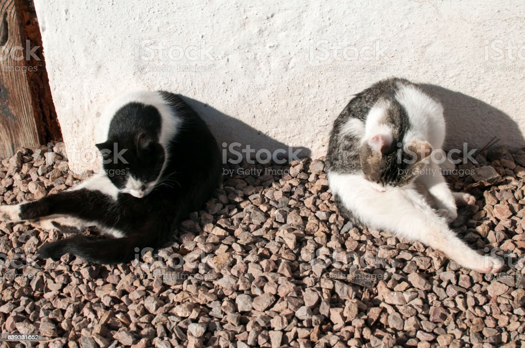 Two young cats clean their fur stock photo