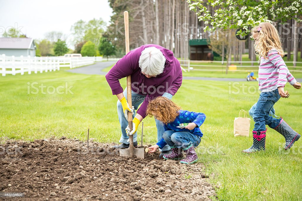 Two Young Girls And Grandma Planting Garden stock photo