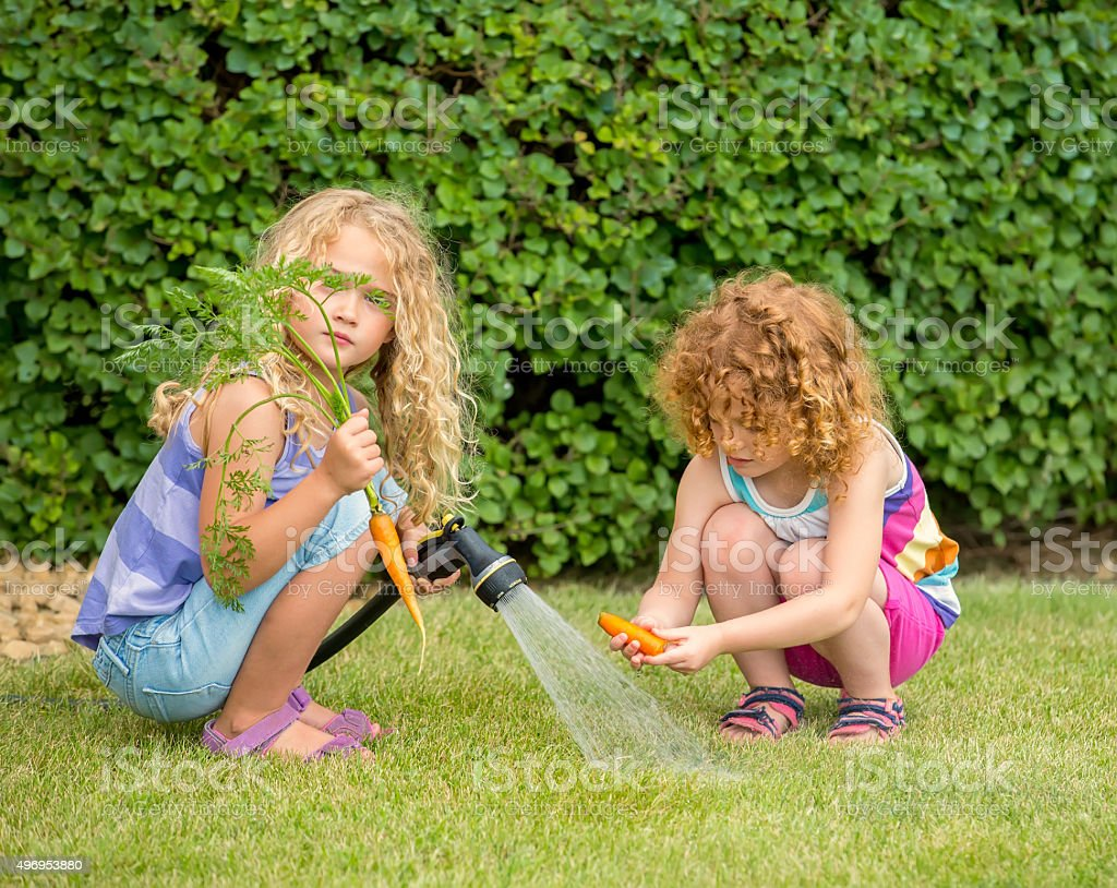Two Young Girls Cleaning Fresh Organic Carrots stock photo