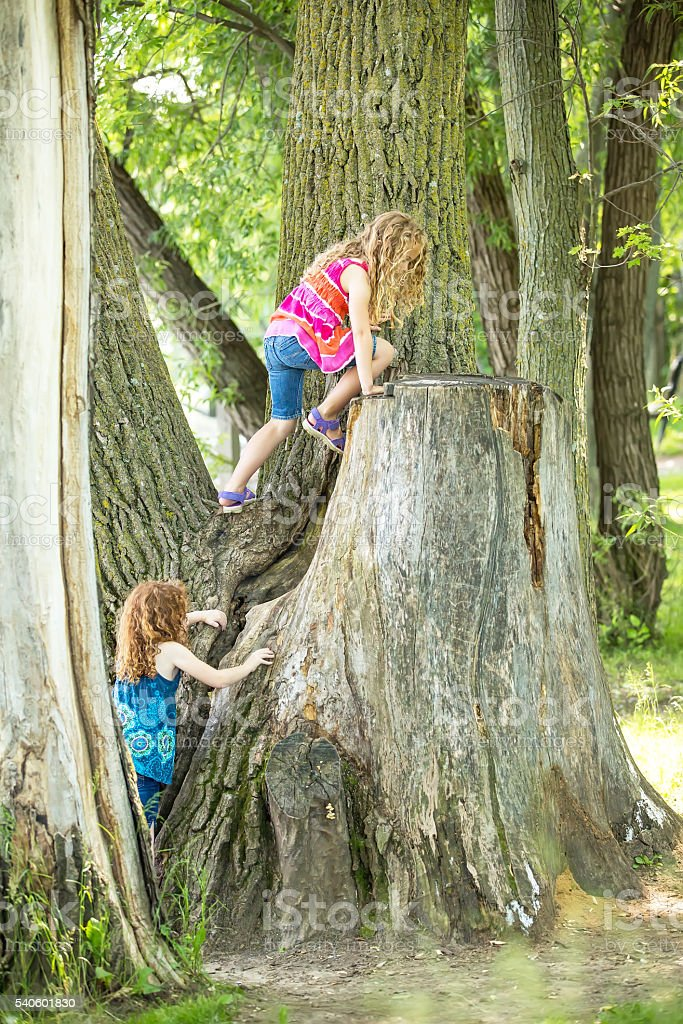 Two Young Girls Climbing Large Tree In Summer stock photo