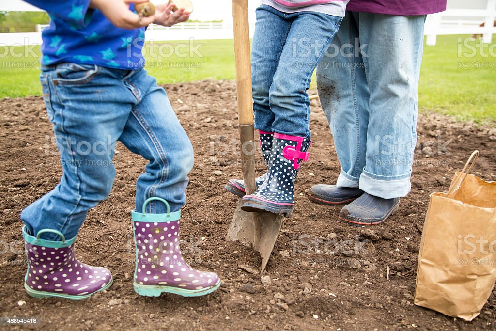 Two Young Girls Helping Adult Plant Potatoes in Garden stock photo