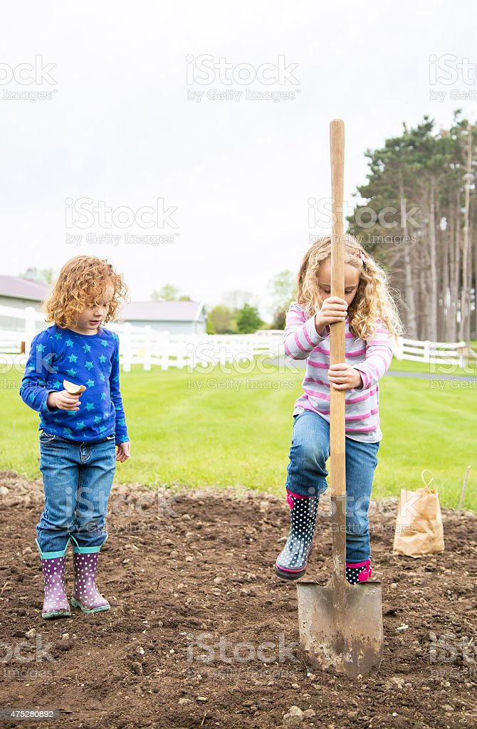 Two Young Girls Planting Potatoes In Garden stock photo