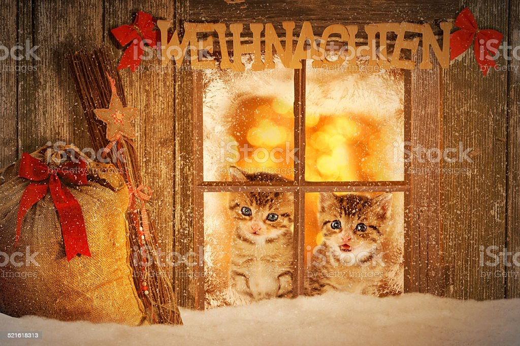 Two young kitten looking curiously out of a window stock photo