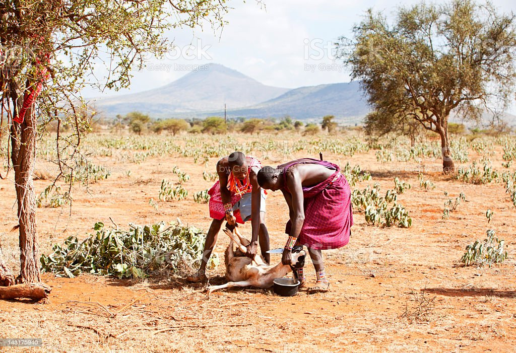 Two young masai ready to slaughter a goat. stock photo